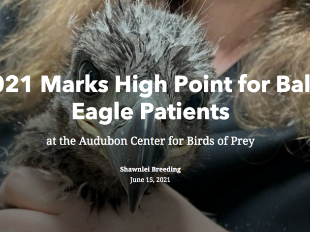 A Look Inside Eaglet Season at the Center for Birds of Prey