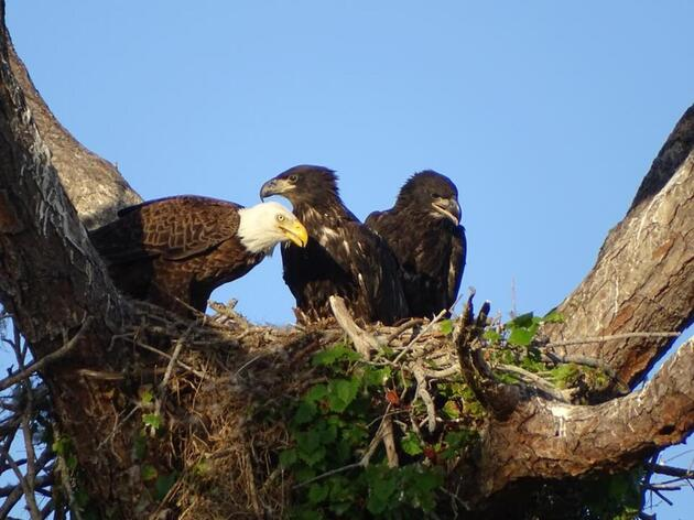 Shifts at the Florida Fish and Wildlife Conservation Commission Forge New Opportunities for EagleWatch