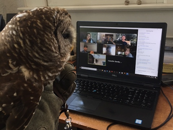 Virtual program participants see a Barred Owl