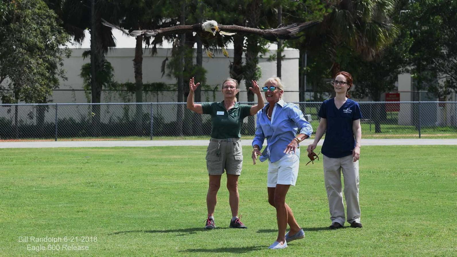 Photo of 600th Bald Eagle Release